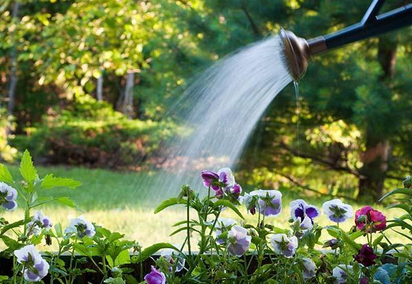 L'arrosage des plantes du jardin