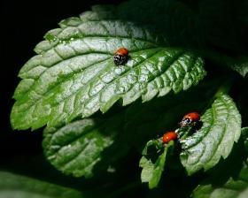 Les insectes, amis du jardin