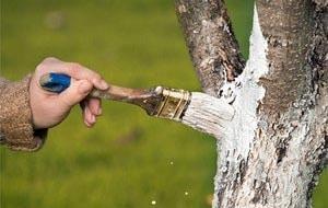 traitement-arbre