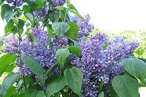 jardinage-en-mai