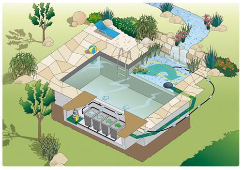 piscine-biologique