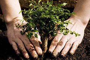 plantation-mai-2