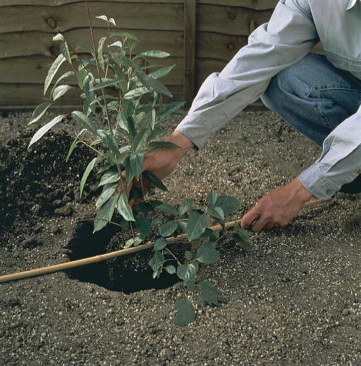 Plantation d'arbustes en avril