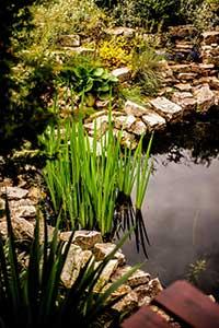 Le système de filtration des piscines naturelles exploite les capacités naturelles des plantes afin que ça soit possible se baigner constamment dans une eau claire et limpide.