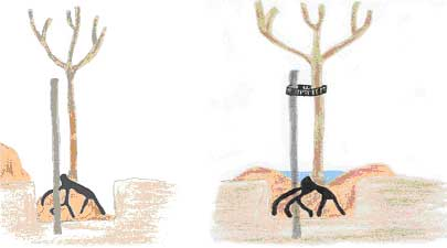 arbres à racines nues