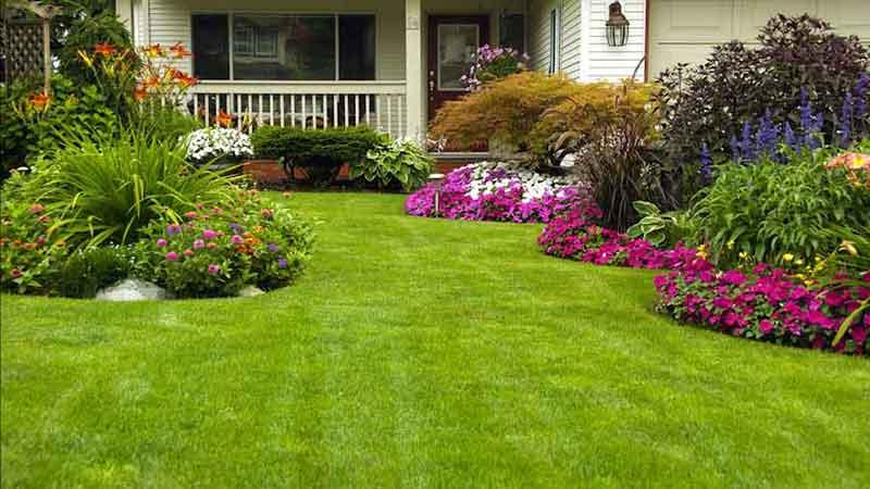 solutions simples et rapides pour redonner un coup de jeune à votre pelouse