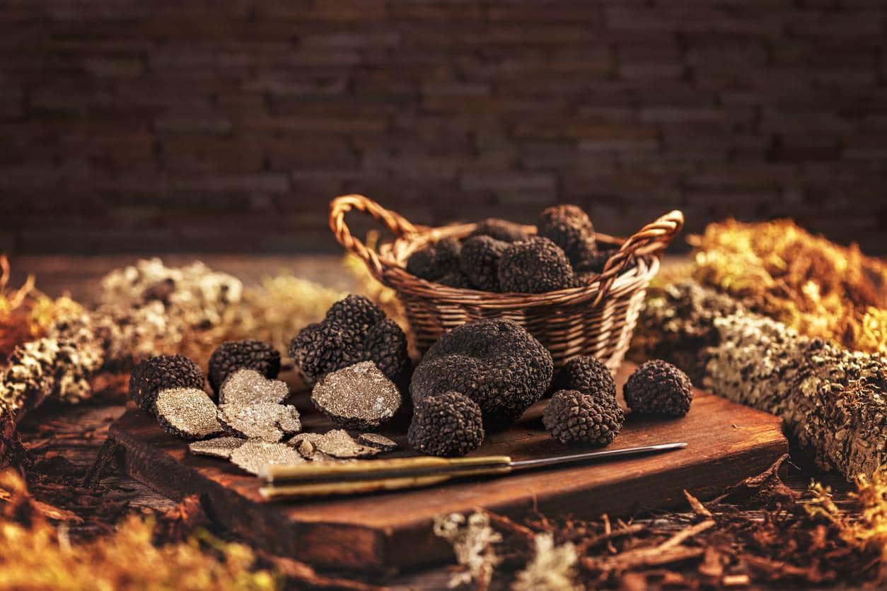 Le plant idéal pour votre culture de truffes